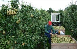 Kleine+appel%2D+en+perenoogst