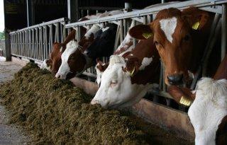 Steenwijkerland+top+grote+melkveestallen