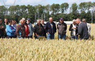 Nieuwe fungiciden in tarweproef