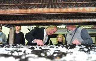 Kamp wil eerlijke champignons