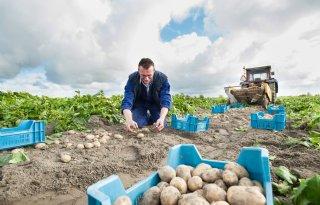 Veiling+vroege+aardappelen+uitgesteld