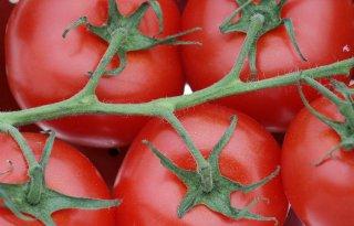 EU-beleid groenten onder de loep