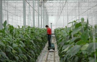 Geen+sterke+toename+illegale+arbeid+tuinbouw