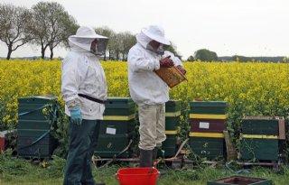 Meer en beter bijenonderzoek nodig