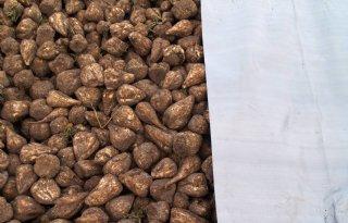 Bieten goed voor 19.000 kuub biogas