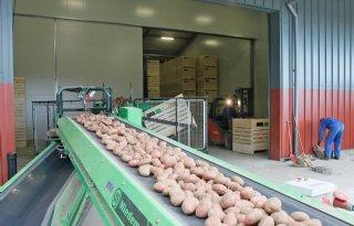 Matig exportseizoen aardappelen