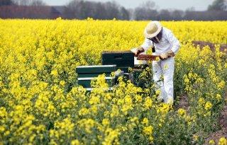 Nederland geen EU-geld bijenstudie
