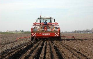 Lichte afname aardappelareaal Nederland