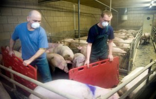 Sterksel+test+stofreductie+in+varkensstal