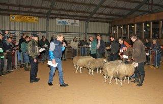ISO-certificaat voor geitenfokkersorganisatie