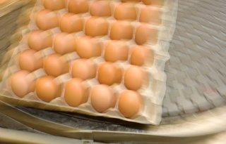 OM: onderzoek Duitse eierfraude loopt nog