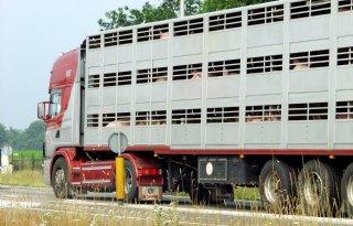 Varkenshandel lijdt niet onder importstop