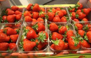 Vollegrondsaardbeien+voor+Van+Grunsven