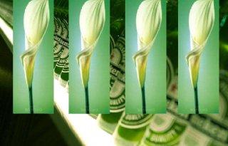 Heineken proeven op leliedag