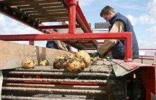 Regeling voor friettelers Agrico