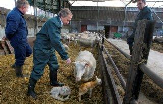 Schmallenberg-bijeenkomst geeft boer rust