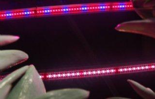 Tulpenbroeier+tevreden+over+LED%2Dlampen