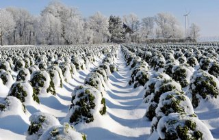 Einde vergoeding schade winterknolgewas