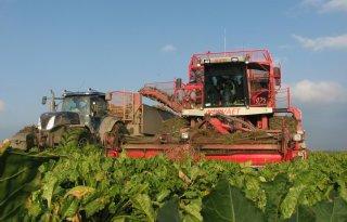Nog 3.000 hectare suikerbieten in de grond