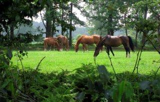 Zorgen+Dierenbescherming+over+paardenleed