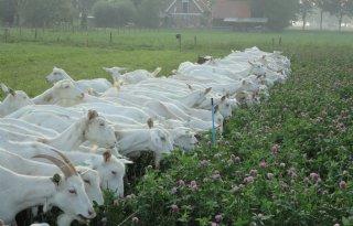 BGNN koploper geitenmelkprijs
