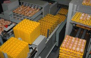 Eierproductie 2011 naar record