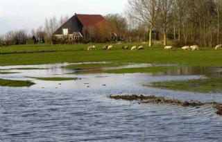 LTO+Noord%3A+bedreigde+veehouders+bijstaan