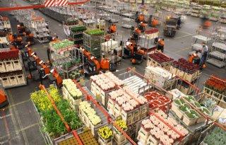 Russische+ban+dreigt+op+sierteeltproducten