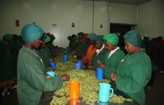 Op handelsmissie naar Tanzania (3)
