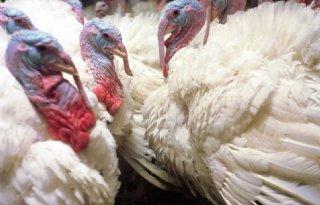 Hoogpathogene+vogelgriep+in+Californi%C3%AB