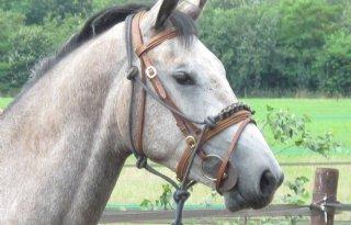 Paarden+in+Brabant+gestoken+in+achterlijf