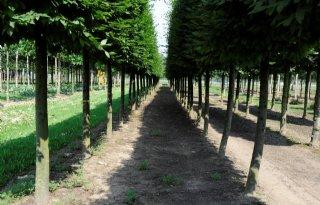 Groenste+dorp+en+stad+weer+in+Nederland