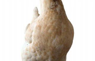 Vogelgriep+bij+hobbykip+Dordogne
