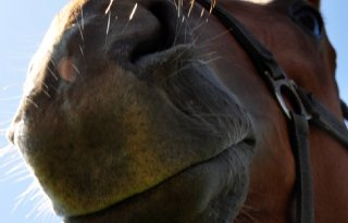 Dierenbescherming%3A+extra+regels+paarden