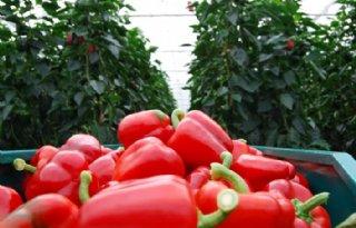 Meer+export+groenten+en+fruit+naar+China