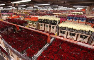 CBS%3A+import+9+miljoen+rozen+per+dag