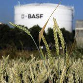 'BASF wil bieden op Syngenta'