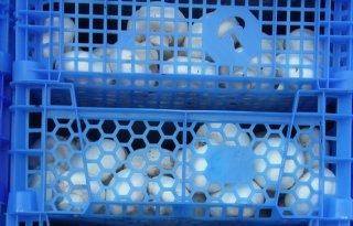 Asscher: koop alleen eerlijke champignons