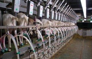 Voorschotprijs geitenmelk fors hoger