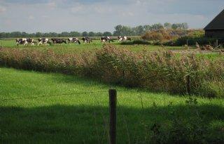 Milieufederatie Drenthe: stop op melkvee
