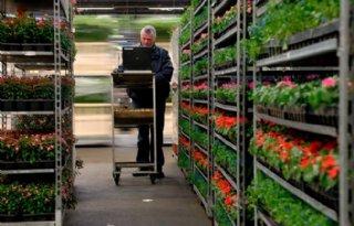Vakbonden stellen FloraHolland ultimatum