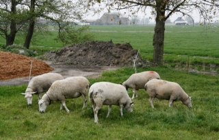 Boeren stellen hondeneigenaar aansprakelijk