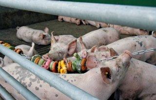 Schenk%3A+Te+hoge+eis+dierenwelzijn+gevaarlijk