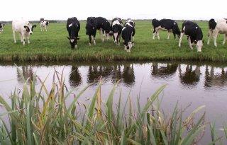 Utrechtse veehouders 'onterecht' vergund