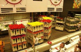 Plus+blijft+bij+export+bloemen+en+planten