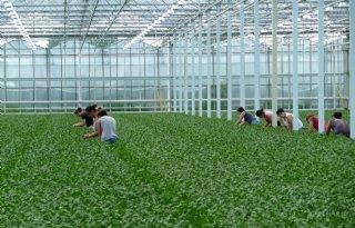 Economie+groeit%2C+agrarische+productie+daalt