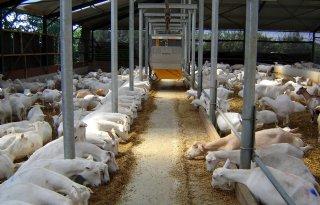 Daling antibiotica geiten nodig