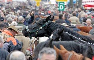 Dierenbescherming uit paardenmarktprotocol