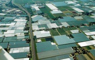 Glastuinbouwareaal Westland neemt iets af