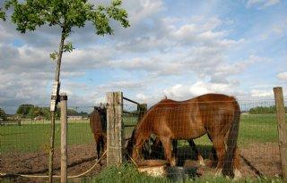Paard mishandeld in Babberich